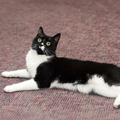 Misty feline pet therapist